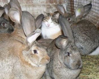 Люська в гостях у кроликов