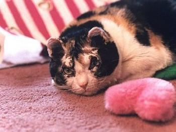 Скарлетт – самая знаменитая кошка Америки