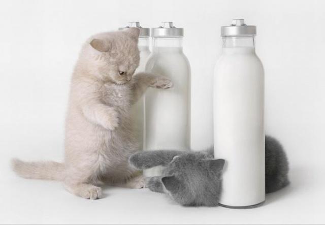 Битва за  молоко