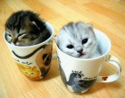 Кошачий кофе