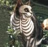 Кот Баскервилей