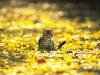 Осень пришла...
