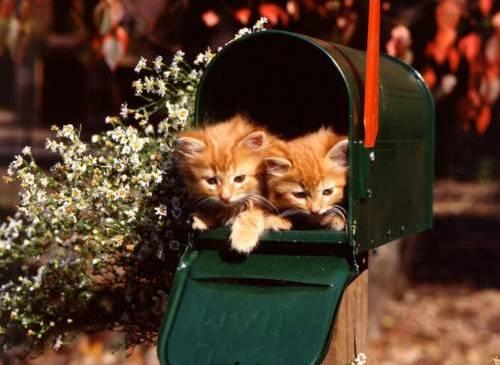 Почта пришла