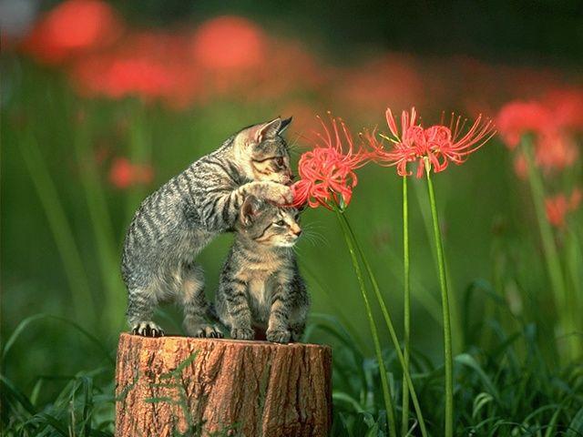 Подари цветок