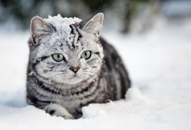 Полосатик в снегу