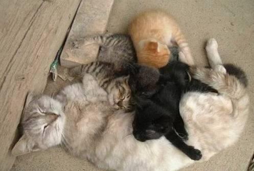 Разноцветная семья