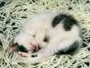 Спящий клубок