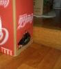 Побег из коробки